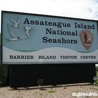 Assateague Adventure Cruise
